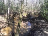 Hurricane Branch Hunting/Recreation : Billingsley : Chilton County : Alabama