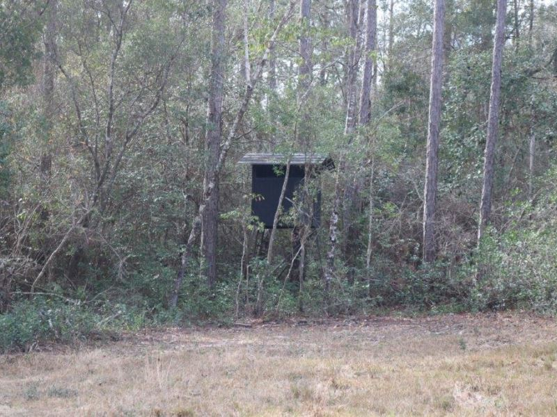 40 Acres In George County : Lucedale : George County : Mississippi