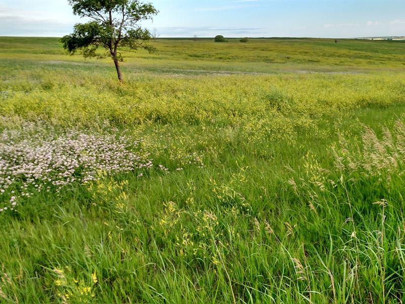 Good Productive Hardland Pasture : Farnam : Frontier County : Nebraska