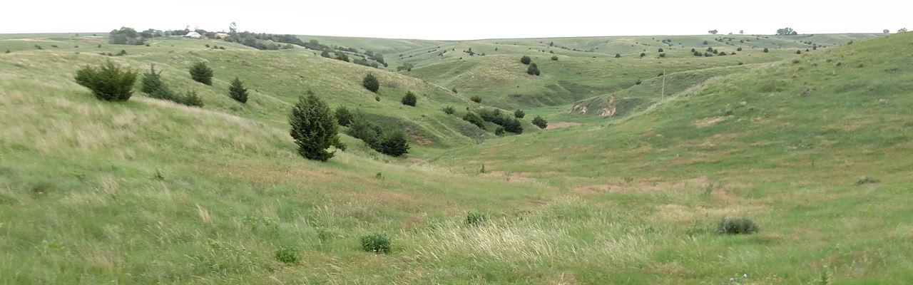 Good Productive Hardland Pasture