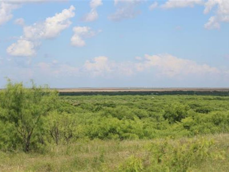Cattle Ranch Auction - 1388 Acres : Electra : Wichita County : Texas