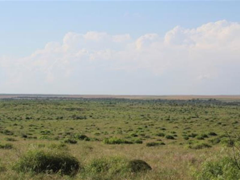 Cattle Ranch Auction - 1760 Acres : Electra : Wichita County : Texas