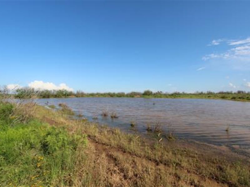 Cattle Ranch Auction - 595 Acres : Electra : Wichita County : Texas