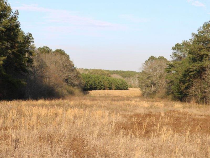 116.39 Acres In Marion/Jefferson Da : Columbia : Jefferson Davis County : Mississippi