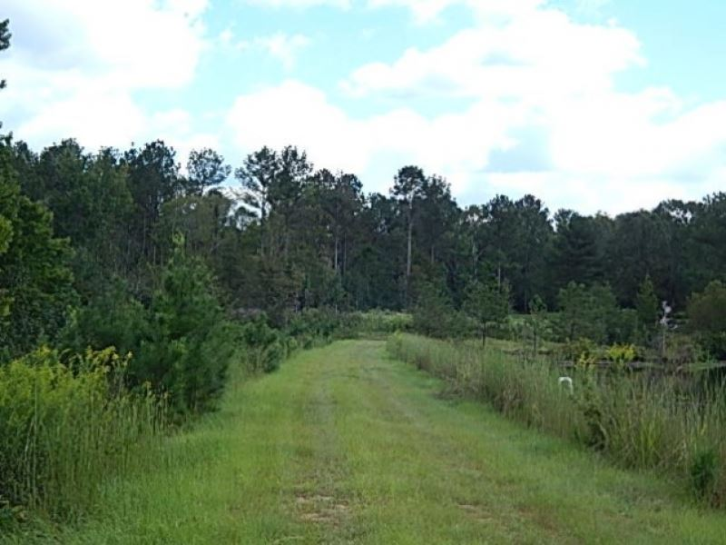 74 Acres In Rankin County Known As : Brandon : Rankin County : Mississippi