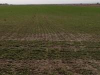 Oshkosh Non-Irrigated Farm : Oshkosh : Garden County : Nebraska