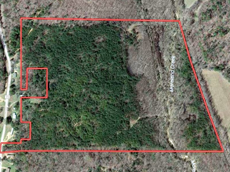 53.3 Ac Hunting Land Close 2 Oxford : Coffeeville : Yalobusha County : Mississippi