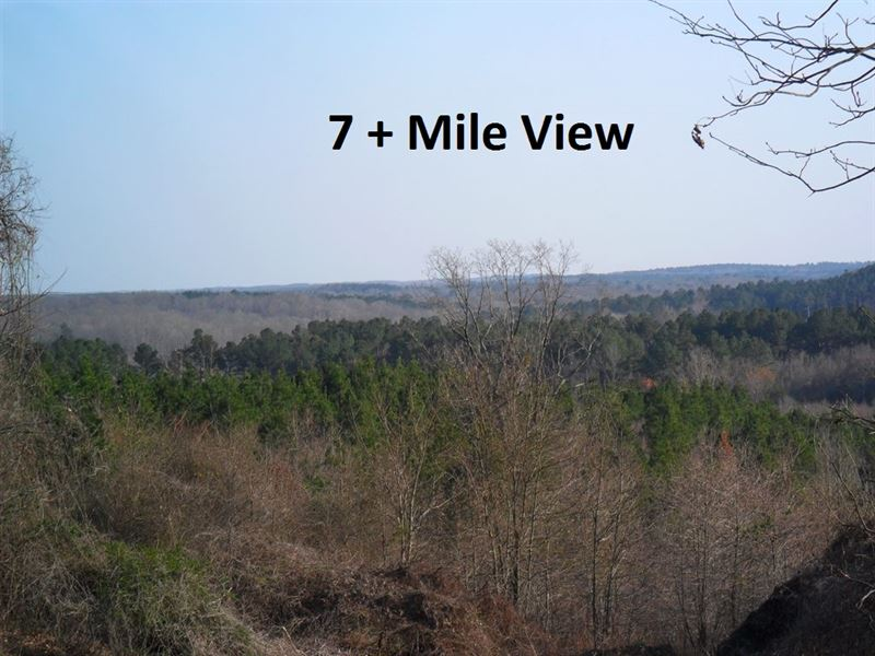 81.2 Ac. Land With Old Cabin : Ashland : Marshall County : Mississippi