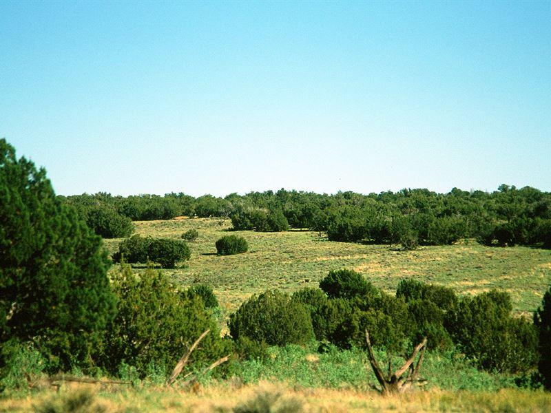 Little Colorado River Valley Ranch : Snowflake : Apache County : Arizona