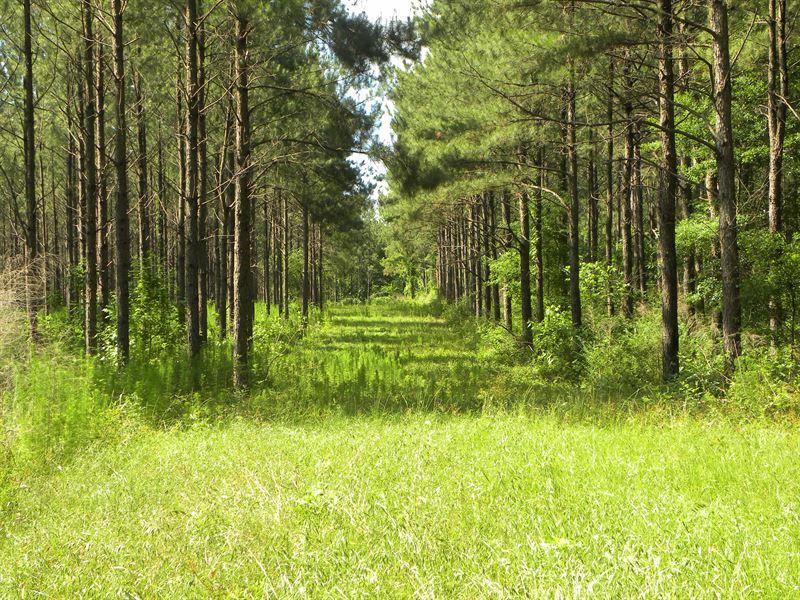 24-033A Gin Creek East : Luverne : Crenshaw County : Alabama