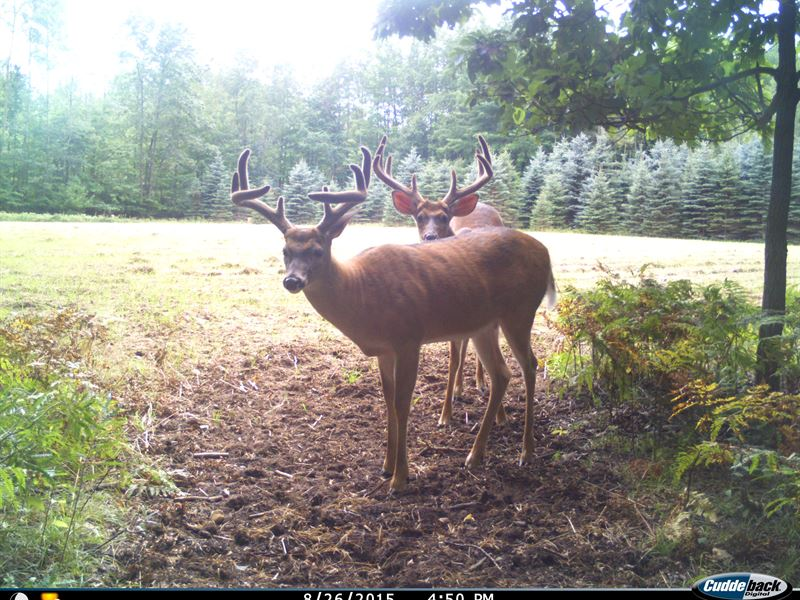 2 Homes And 90 Acres : Manistee : Manistee County : Michigan