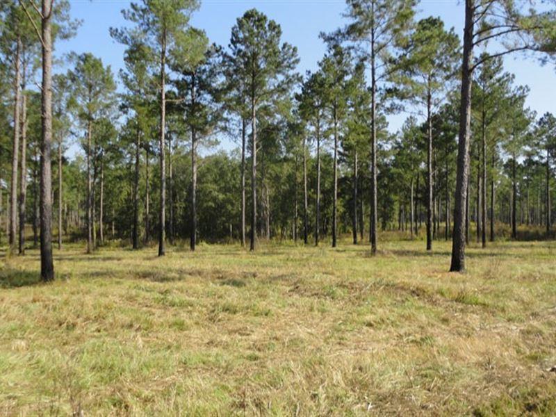 Farm And Recreational Acreage : Hawk : Pulaski County : Georgia