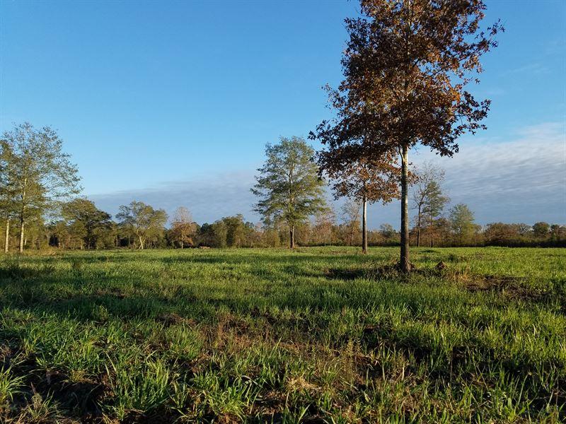 Beautiful East Texas Lufkin Farm : Lufkin : Angelina County : Texas