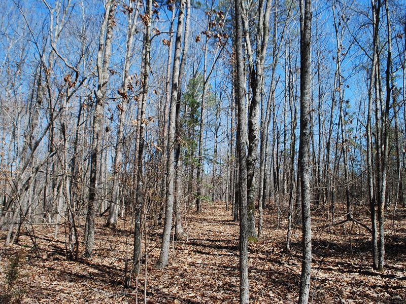 53.21 Acre Recreational Tract : Union : Union County : South Carolina