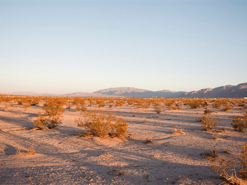 10 Acres On Paved Road In 29 Palms : Twentynine Palms : San Bernardino County : California