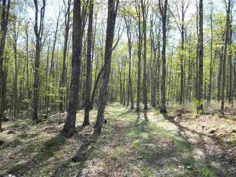 Schultz Rd Hunting, Mls 1100302 : Ralph : Dickinson County : Michigan