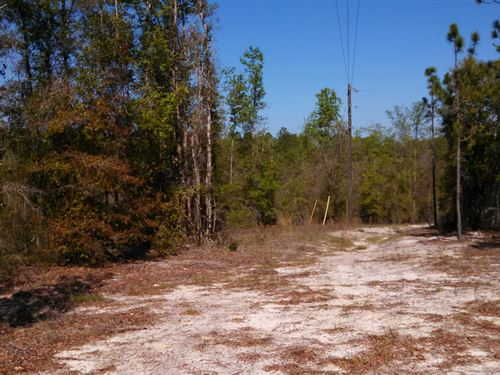 24 Acres In Ft White : Fort White : Columbia County : Florida
