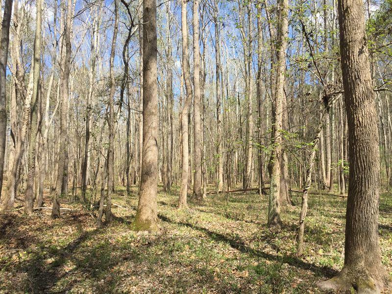 Hunter's Paradise : Washington : Wilkes County : Georgia