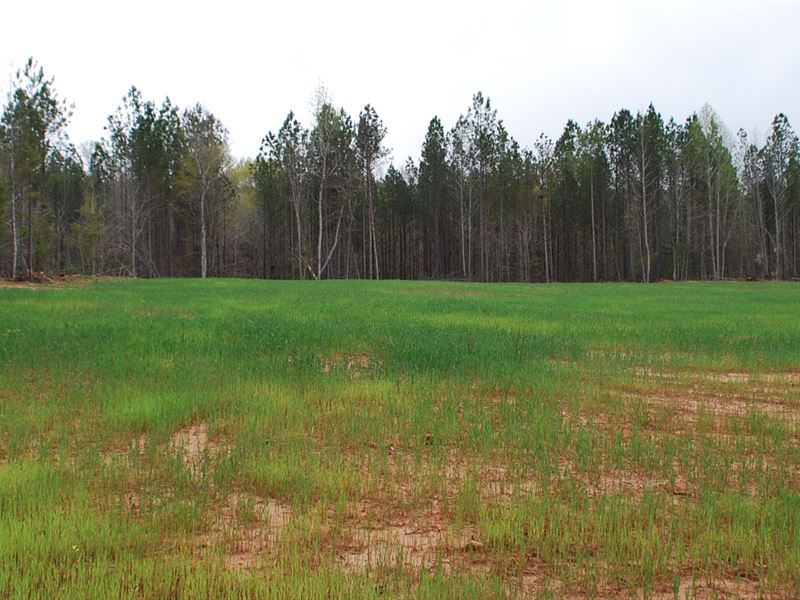 103Ac Timberland/Recreational Tract : Jonesville : Union County : South Carolina
