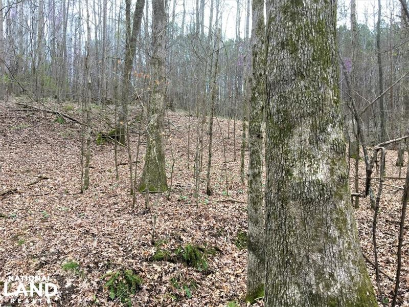 Timber Investment And Hunting in Fr : Russellville : Franklin County : Alabama