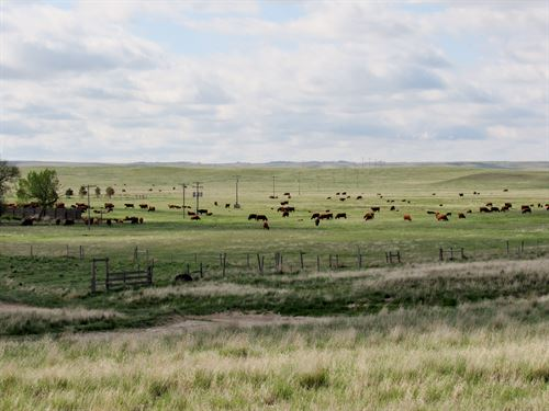 Nebraska Sioux County Pasture : Morrill : Sioux County : Nebraska