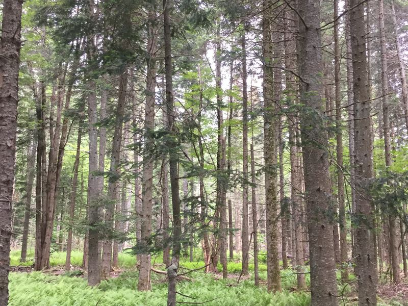 Walk To State Land : Osceola : Lewis County : New York