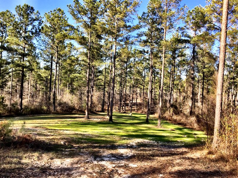 2000+/- Contiguous Acres Middle Ga : Roberta : Crawford County : Georgia