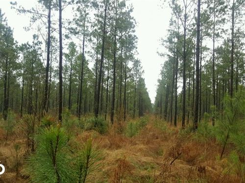 Burgaw Hunting Land : Burgaw : Pender County : North Carolina