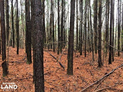 Natural Bridge Investment Property : Natural Bridge : Winston County : Alabama