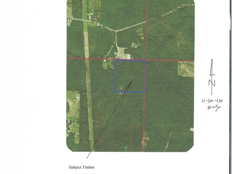 Hunting Land In Benndale Ms : Benndale : George County : Mississippi