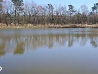 Homesite And Hog Farm Opportunity : Willard : Pender County : North Carolina