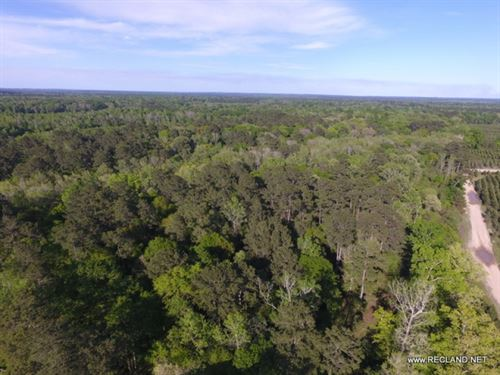 63 Ac Timberland And Hunting Tract : Burkeville : Newton County : Texas