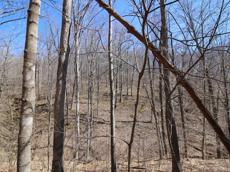 Bunker Hill Rd - 80 Acres : Mc Arthur : Vinton County : Ohio