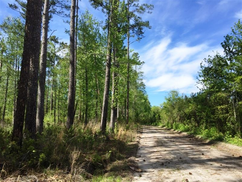 Buckhead Creek Tract : Ruffin : Colleton County : South Carolina