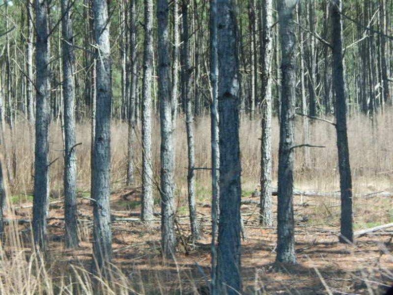 Timber Tract In Union, Sc : Union : Union County : South Carolina