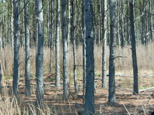 Timber Tract In Union, Sc : Union : South Carolina