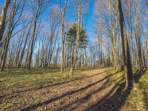 Tr 539 - 43 Acres : Loudonville : Ashland County : Ohio