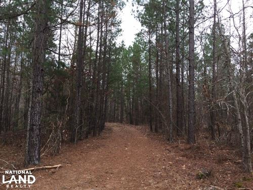 64 Acres Timberland/Development : Jessieville : Garland County : Arkansas