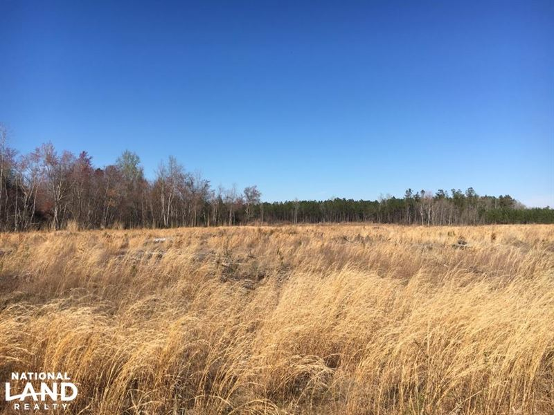 Duford Secluded Home Site Lot 8 : Nichols : Horry County : South Carolina