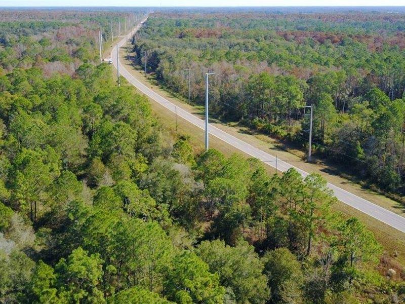 Upper Hillsborough Reserve : Zephyrhills : Pasco County : Florida