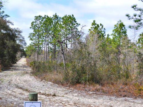 Annutteliga Hammock Tract 1 : Weeki Wachee : Hernando County : Florida