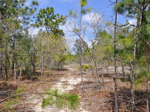 Annutteliga Hammock Tract 4 : Weeki Wachee : Hernando County : Florida