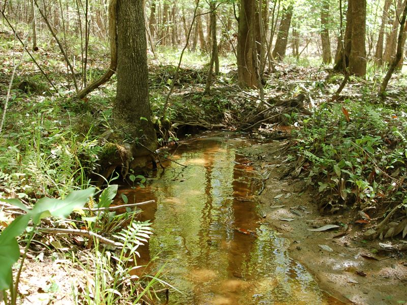 Your Own Private Hunting Retreat : Troy : Pike County : Alabama
