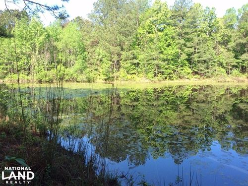 80 Acre Hunting And Fishing Paradis : Utica : Copiah County : Mississippi