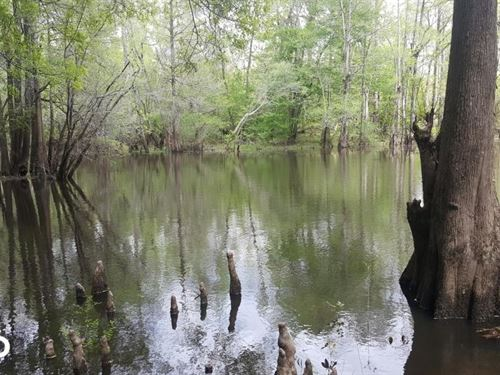 Livingston Creek Hunting And Fishin : Riegelwood : Columbus County : North Carolina