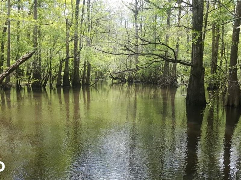 Riegelwood Waterfront Hunting Land : Riegelwood : Columbus County : North Carolina