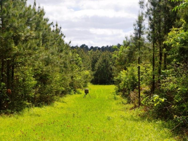 87.49 Acres In Lincoln County Ms : Bogue Chitto : Lincoln County : Mississippi