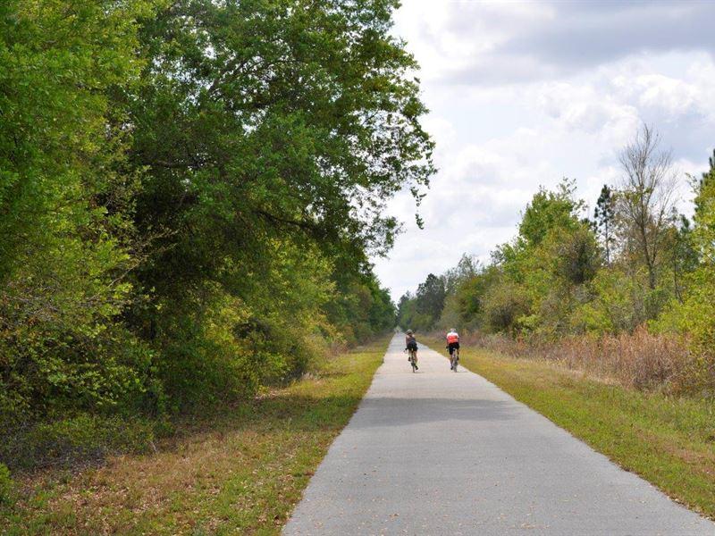 Green Swamp Preserve 7 : Groveland : Lake County : Florida