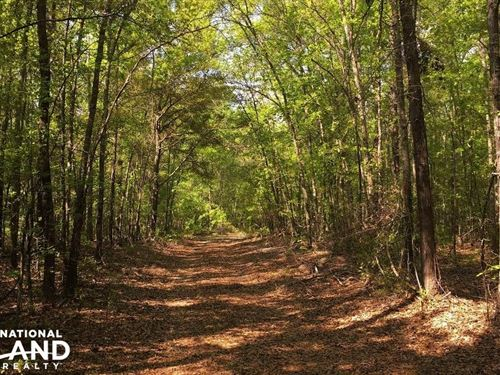 Spring Branch Hunting Retreat : Bamberg County : South Carolina
