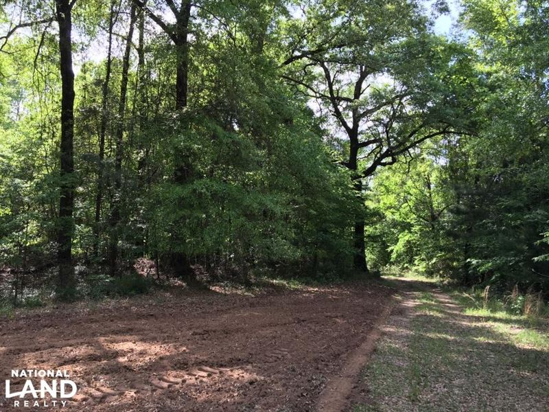 Jackson Homesite Hunting And Recrea : Jackson : Clarke County : Alabama